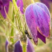 Весна :: anton nenakhov