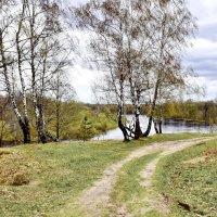 Березы  на  берегу. :: Валера39 Василевский.