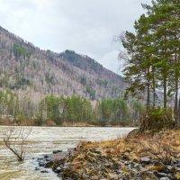 река Катунь :: Николай Мальцев