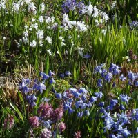 Весна :: Вероника