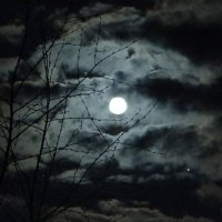 Лунная ночь :: Юрий Владимирович 34