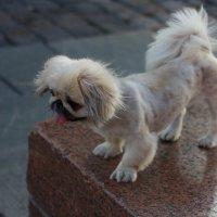 Про собак. :: Александр Бабаев