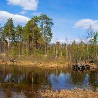 Проснулись мшарные болота... :: Лесо-Вед (Баранов)