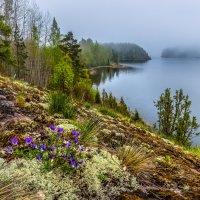 Фиалки на острове :: Фёдор. Лашков