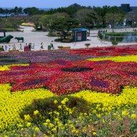 Тюльпаны в Тхаэне :: Irina Shtukmaster
