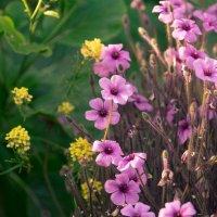 Ботаническая сказка :: Анна Удалова