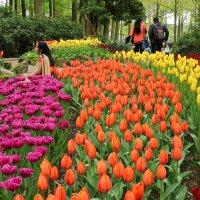 Весенние цветы :: Людмила Шнайдер