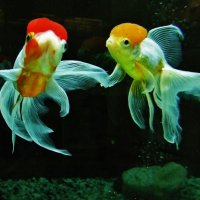 И подружились они в аквариуме.. :: Aida10