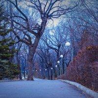 Загородный парк :: Никита Оберник