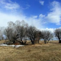 Под апрельским небом синем. :: nadyasilyuk Вознюк