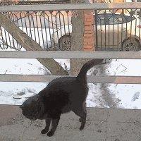 черная котеечка :: Юлия Денискина