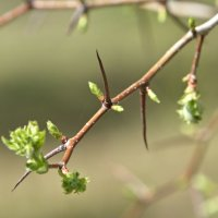 Весна пришла :: Фиклеев Александр