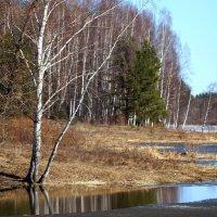 На деревенском пруду :: Исаков Александр