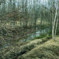 в лесу весной :: Сергей Бойцов