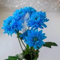Голубые хризантемы :: Наталья Кузнецова