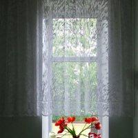 Тюльпаны на окне :: Дубовцев Евгений