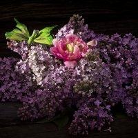 Натюрморт с сиренью, тюльпаном и бабочкой :: Татьяна Евдокимова