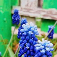 Flowers :: Igor Usov