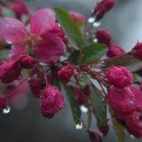 дождь :: Всеволод
