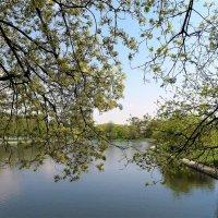 Начало мая в парке Дружбы :: Ирина Via