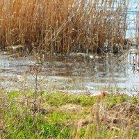 На озере :: Нина
