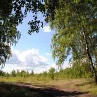 Летний день :: lyudmila Курлова