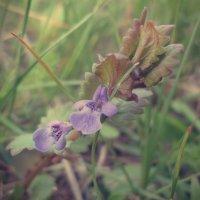Луговые цветы :: Виктория Власова