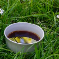 Чашка кофе на траве. :: shabof