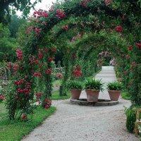 Розовый сад :: Николай Танаев