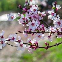 Весна :: Дарья Бурмистрова