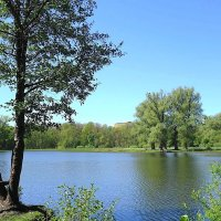Озеро Лесное :: Маргарита Батырева