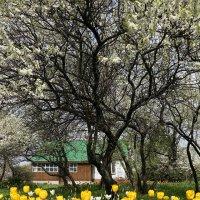 В цветущем саду ... :: Лариса Корженевская