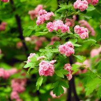 весна :: Юрий Словецкий