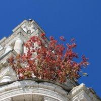 и на камнях растут деревья :: ИРЭН@ Комарова