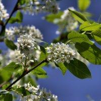 весна :: Евгений Верзилин