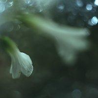 Волшебные пузырьки ))) :: Елена Баландина