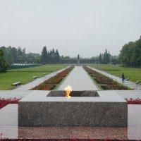 Пискарёвское мемориальное кладбище :: Елена Павлова (Смолова)