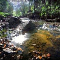 Майские джунгли Коломенского... :: Андрей Войцехов