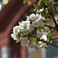 Цветы в мае :: Фиклеев Александр