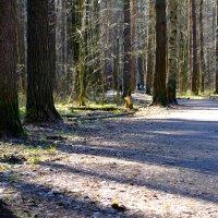 лес :: Павел Котов