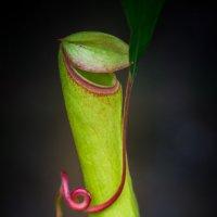 В ботаническом саду :: Gotardo Ro