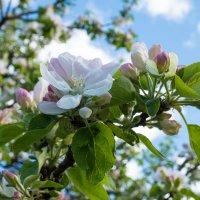 весна :: Андрей Данилов