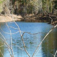 Речка в лесу.. :: Elena Wise