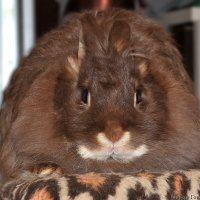 кролик :: Laryan1