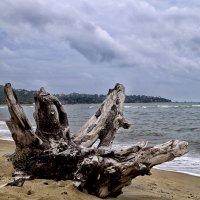 Сиамский залив :: Alex