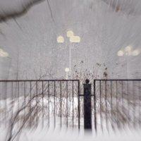 Ботанический сад в марте :: Леонид leo