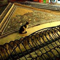 Кот -искусствовед   Греция :: олег свирский