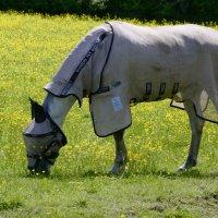 Почти рыцарский конь... :: Тамара Бедай