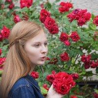 Розовый куст :: Наталия Григорьева