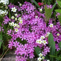 Цветы :: Elena Gosteva
